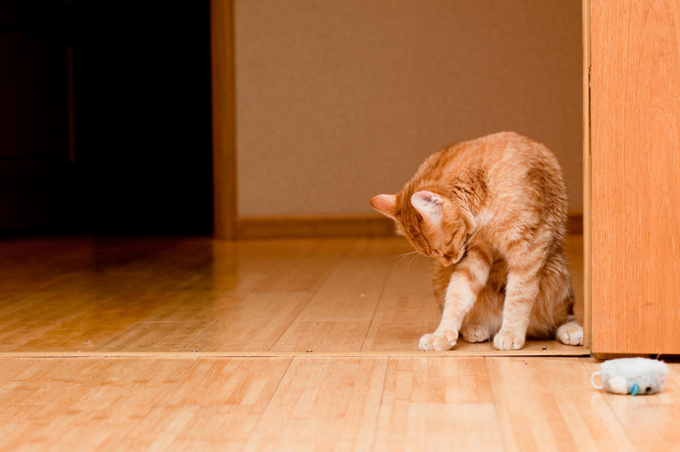 diy carpet cleaning solution for pet stains